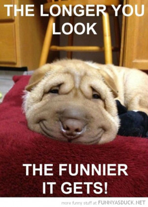 smiling dog animal longer look funnier it gets funny pics pictures ...