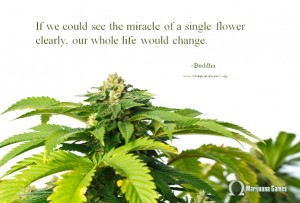 Marijuana Quote by Buddha