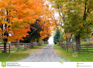 Royalty Free Stock Photo: Beautiful country road in autumn foliage