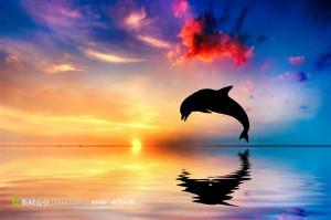 海边夕阳海豚剪影 (jpg)