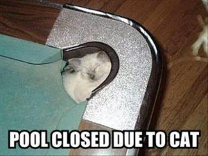 Funny Cat Pictures with Captions 18