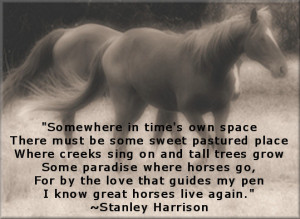 Quotes About Horses Eyes
