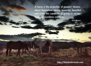 Source: http://blackmtnranch.com/horse-quotes/ Like