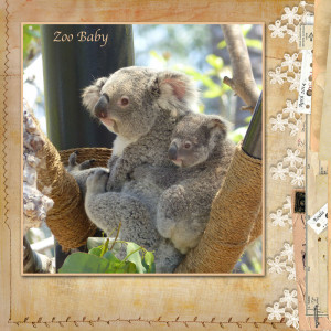 Koala Quotes Inspirational. QuotesGram