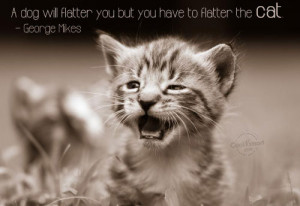 Quotes About Cats Love Cats Quote A dog will flatter