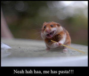 Funny Hamster Images 2013