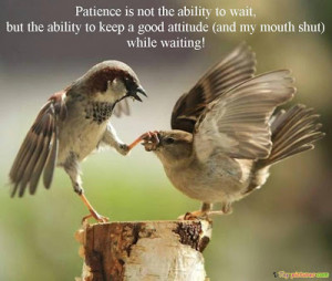 Birds Funny Pictures