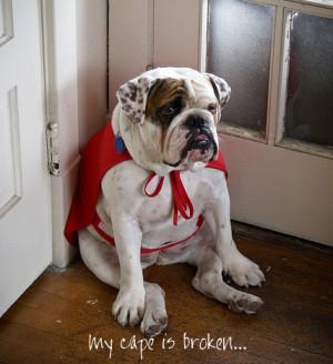 English Bulldog Funny Quotes English bulldog superhero cape