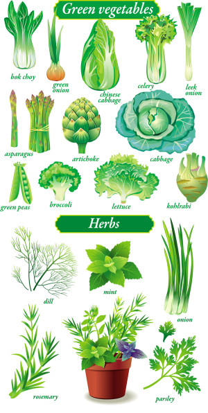 Green Vegetable Names