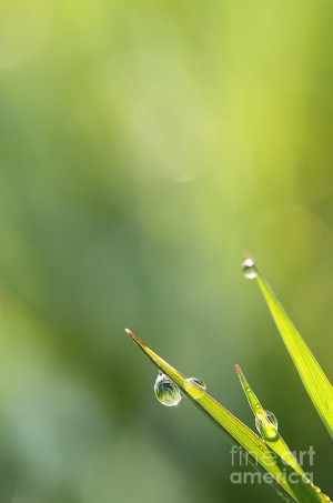 Morning Dew Photograph Jan