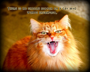 Funny Cat quotes Photography Mad Yawning expresssions animal photos