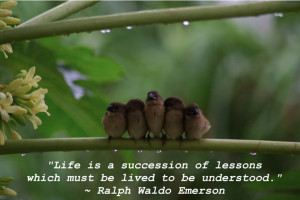 Life Lesson Sayings And Quotes Life is a succession of
