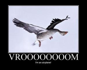 funny goose funny goose 1181395 jpg funny goose funny goose