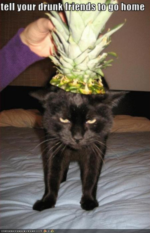 funny-pictures-cat-suggests-your-drunk-friends-go-home
