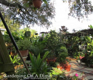 Sunday Garden Quote: Plant Happiness In Your Garden
