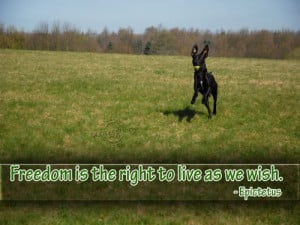 Freedom is the right to live as we wish ~ Freedom Quote
