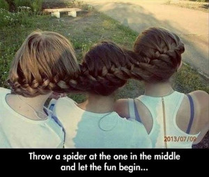 Related Pictures funny spider jokes lol