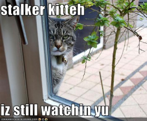 funny pictures stalker cat is watching you