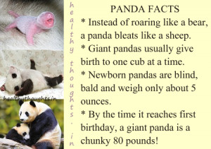 panda facts by healthythoughts.in-knowledge quotes-baby panda ...