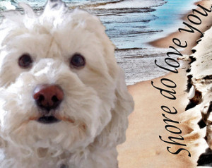 pet portraits beach art custom dog portrait pet memorial dog sayings ...