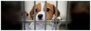 Help a Homeless Pet Find a Home