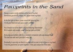 Sands, Quotes, Rainbows Bridges, Pets Loss, At The Beach, Paw Prints ...