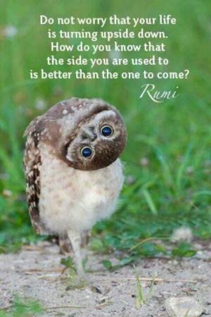 Rumi Owl