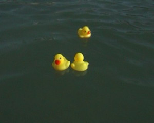 Rubber Ducks Floating Water