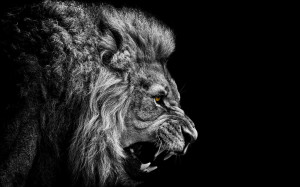 Full View and Download Lion Wallpaper 12 with resolution of 1920x1200 ...