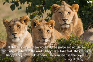 Lions In Love Quotes Read these quotes from some