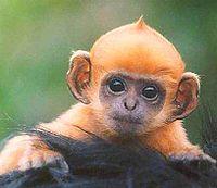 Beauty, thou wild fantastic ape