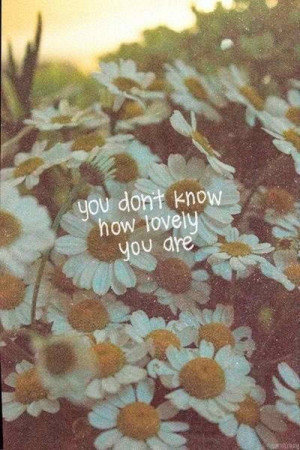 daisy, flowers, love, lovely, quotes, sweet, you