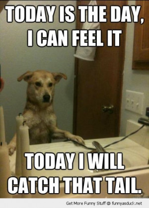 today i will catch the tail dog animal mirror funny pics pictures pic ...