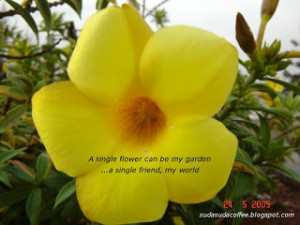 Flower Quotes Flowers Quote