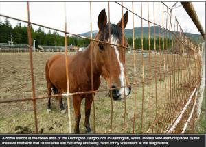 Discuss WA Mudslide Horses at the Horse Rescue / Adoption forum ...