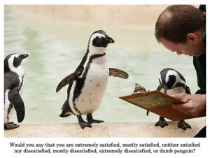 Penguins being surveyed