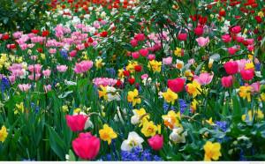 spring-flowers-wallpaperflower-wallpaper-background-hd-desktop ...