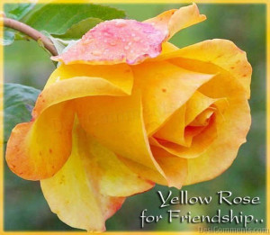 Yellow Rose For Friendship Graphics
