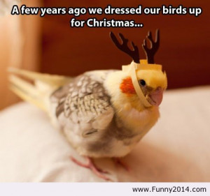 ... Christmas Bird | Funny 2014 - Funny Pictures 2014, Funny Quotes 2014