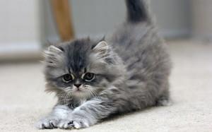 Kittens Cute Kitten