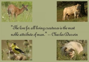 Famous Quotes About Animals