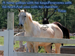 ... About Life: Funny Animal Quotes And Pictures Of The White Horse