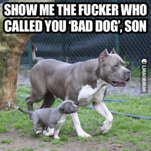 Don't mess with this dog