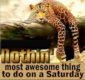 Nothin Most Awesome Thing To Do On A Saturday Tiger Graphic