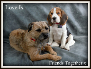 Quotes Funny Beagle Pics With Ments Paralegal Jokes
