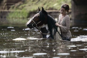 The horse moved like a dancer, which is not surprising. A horse is a ...