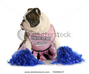 stock photo : puppy love - funny english bulldog couple dressed up as