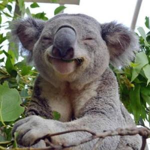 happy animal 3