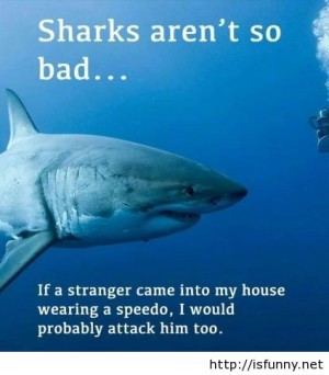 funny sharks are bad pics quote fun pictures fun sayings funny animals ...