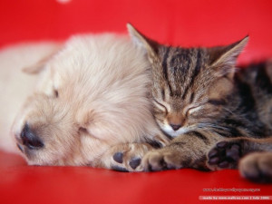 cat-and-dog-together-funny-cute-animal-in-red-bed-cute-cat-pictures ...
